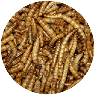 1kg Mealworms For Wild Birds Icon