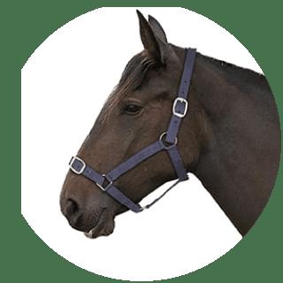 Gallop Navy Padded Adjustable Headcollar