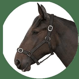 Gallop Black Padded Adjustable Headcollar
