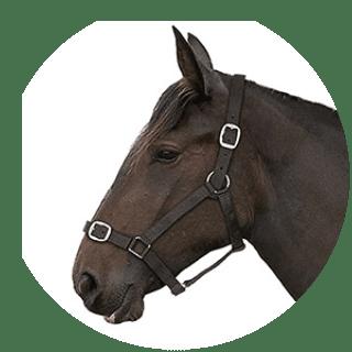 Gallop Basic Black Nylon Heacollar + Lead Rope